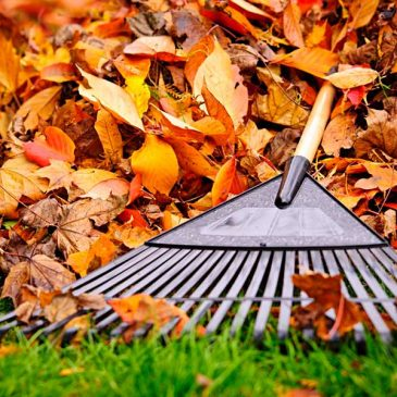 Fall Clean up Marketing
